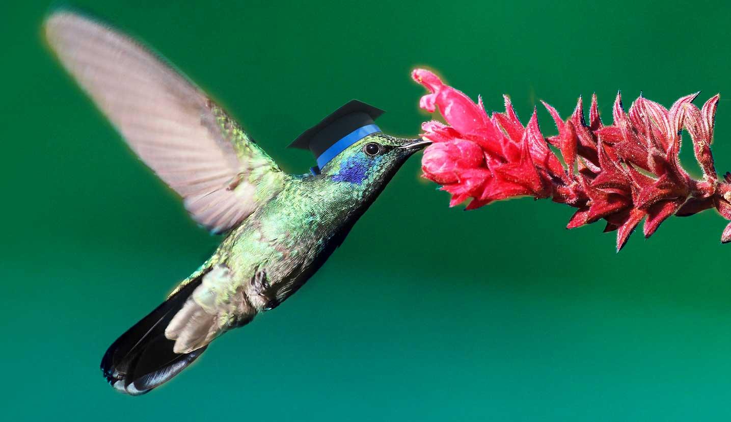 hummingbird smarter with rankbrain